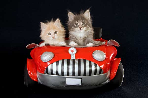 We Googled Cats In Cars, Can't Stop Laughing At What We Found