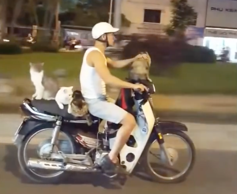 The Ultimate Pussy Mobile? Man Carries Cats On Scooter