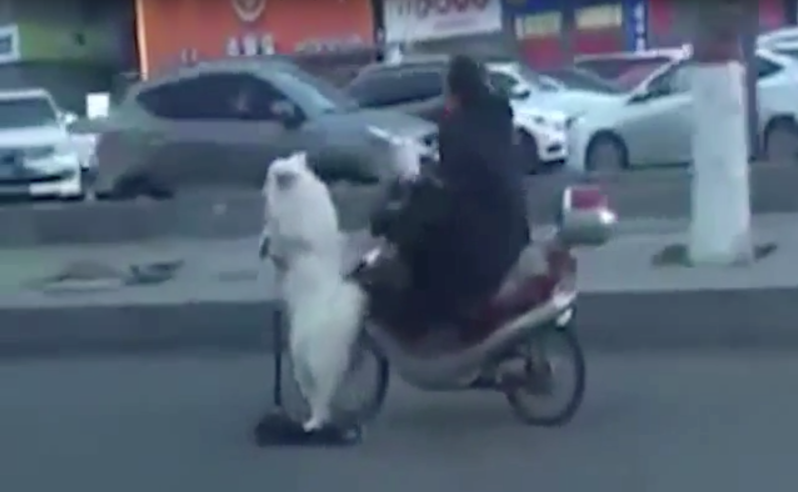 Dog-Tired Pooch Gets A Free Scooter Ride In China