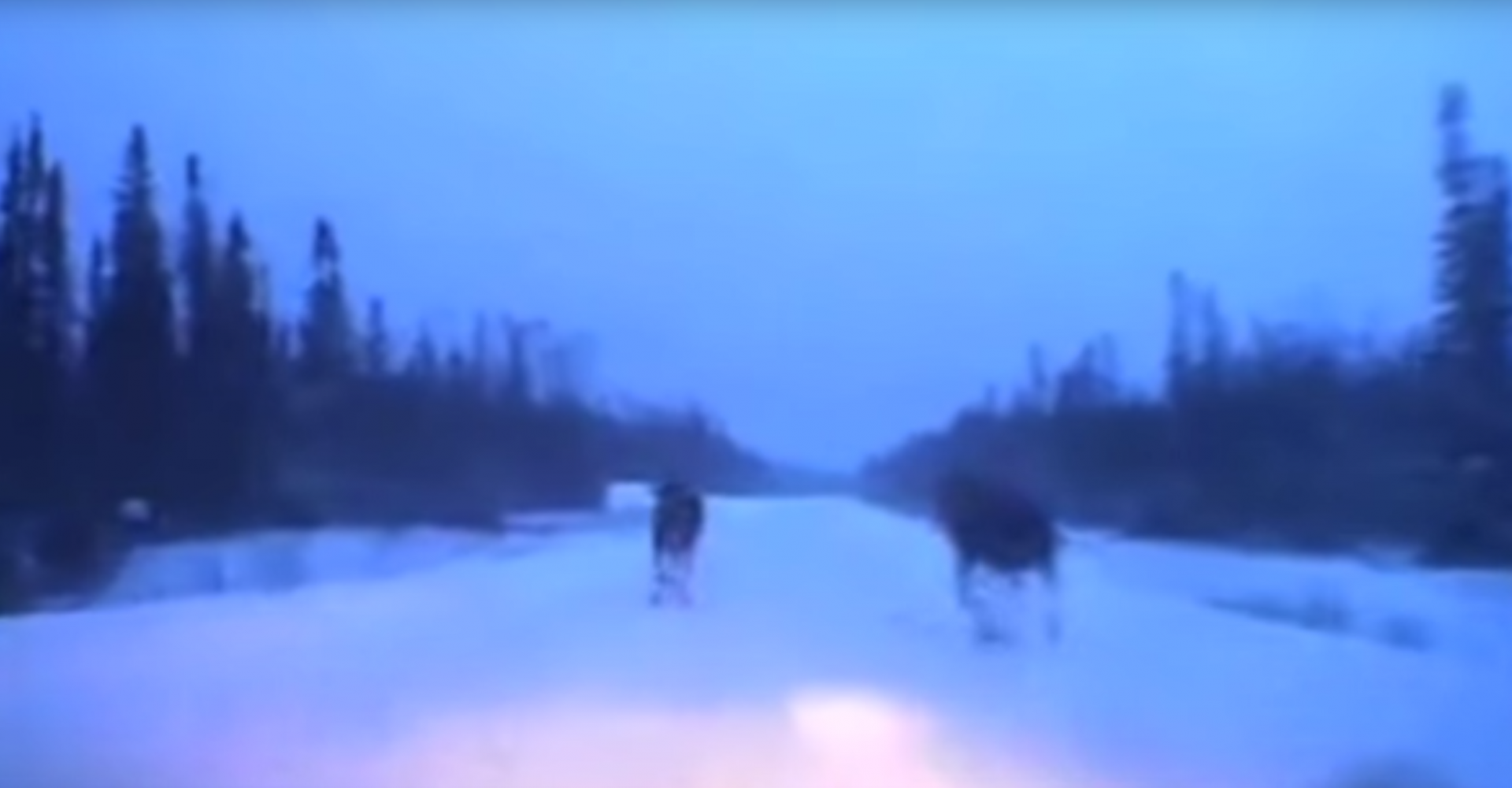 Driver Shows How To Avoid Moose In Snowy Conditions
