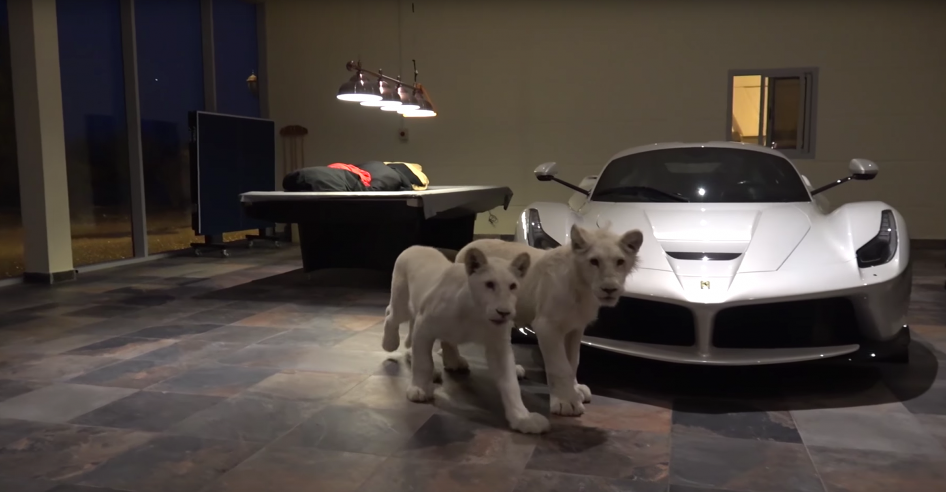Lion Cubs And Cars Co-Exist In Qatari Garage