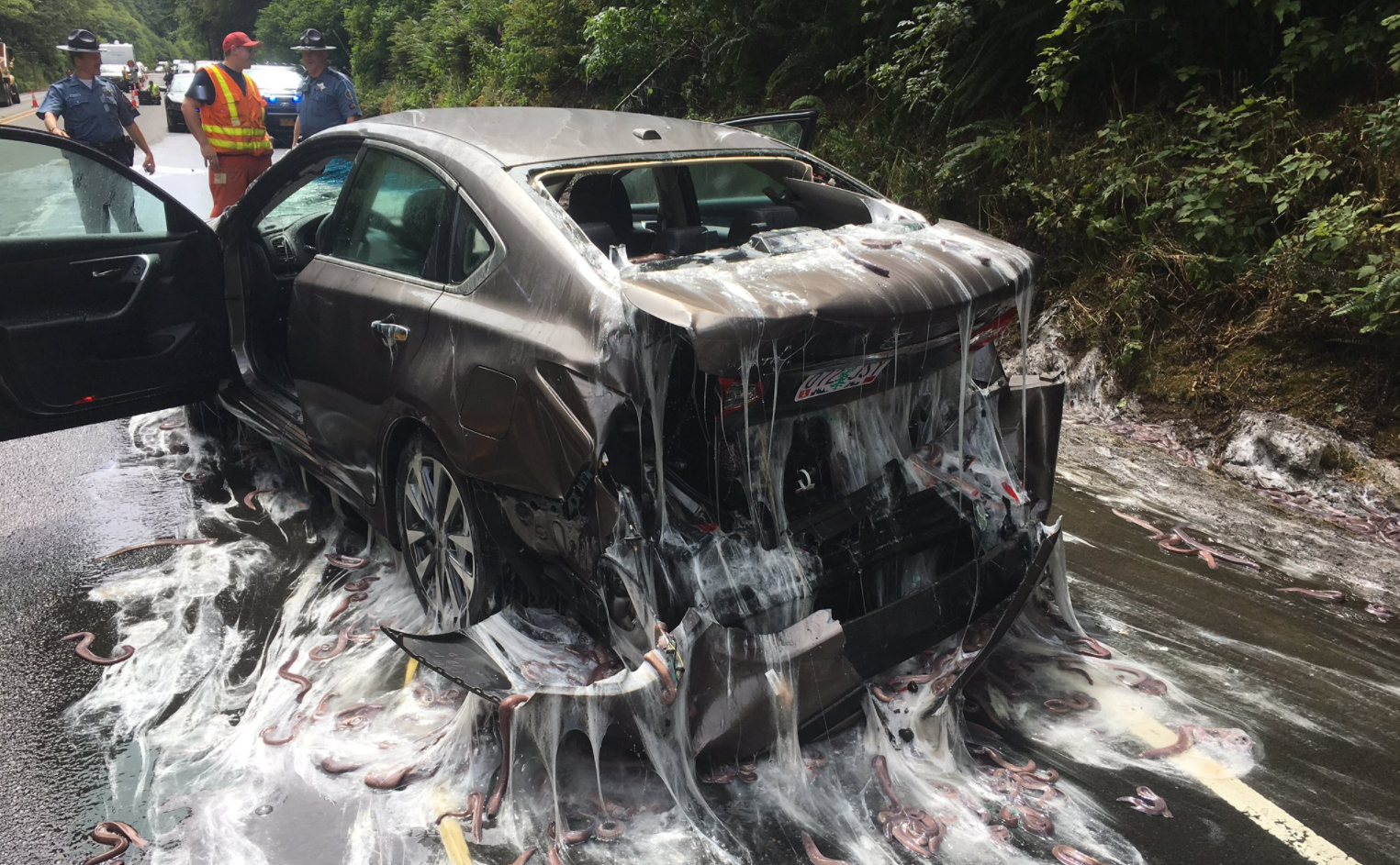 The most disgusting car crash situation you'd never even considered