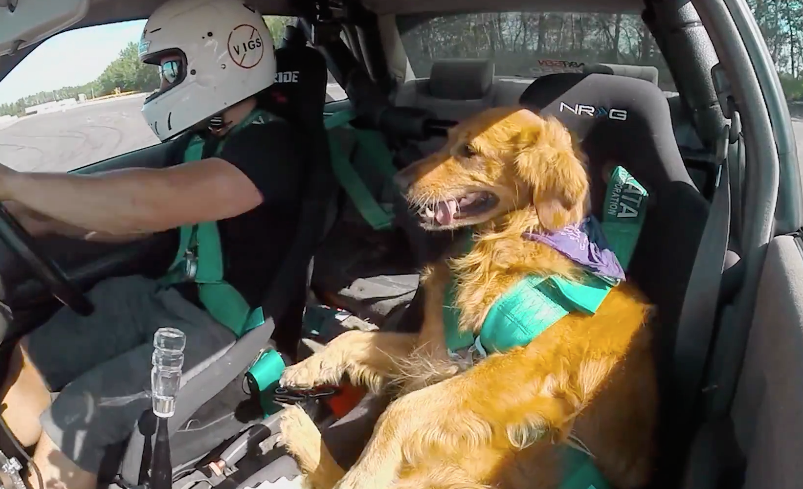 Watching this dog drifting is guaranteed to put a smile on your face