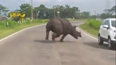 Rhino causes chaos as it runs down road in India