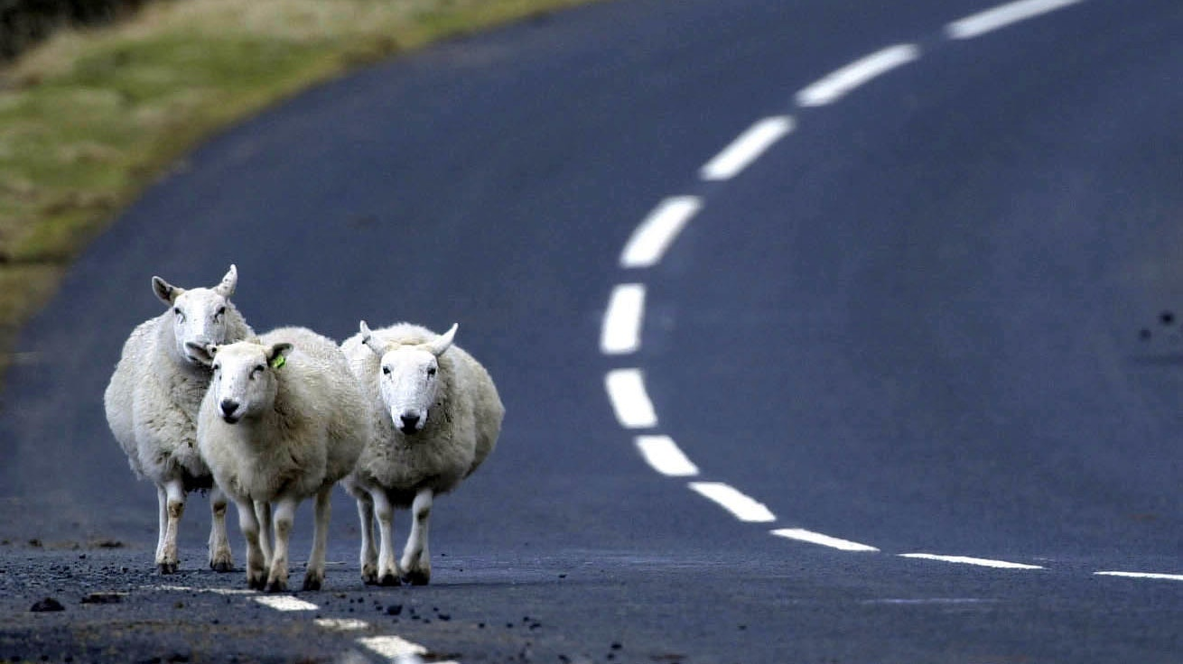 Over half of drivers have hit or had a near-miss with animals on the road